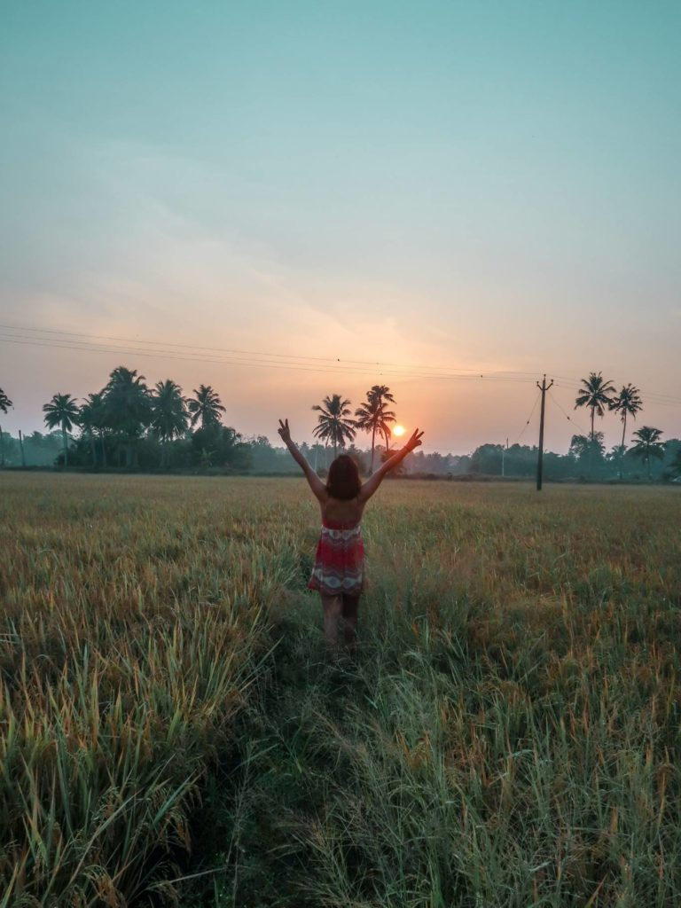 sunrise at the rice field