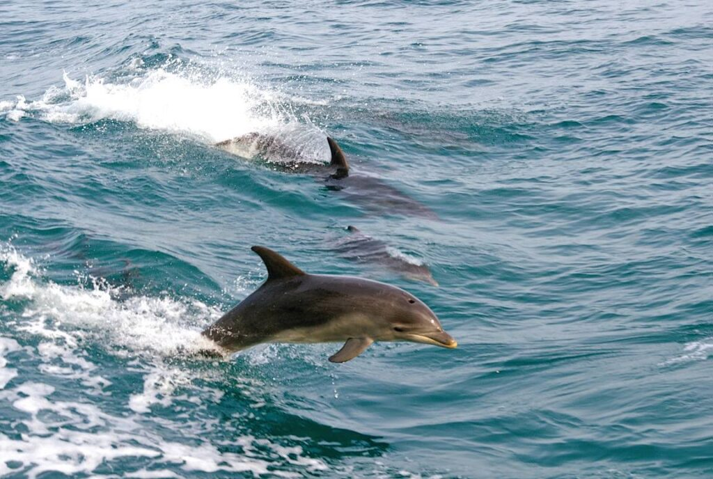 dolphins on the water