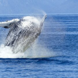 captain cook cruises whale watching sydney