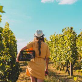 Healesville wineries