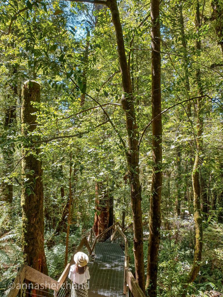 Rainforest gallery yarra valley Victoria