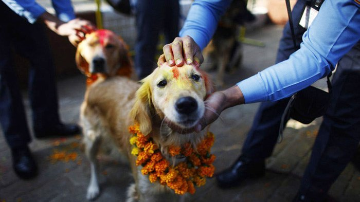 tihar festival in nepal