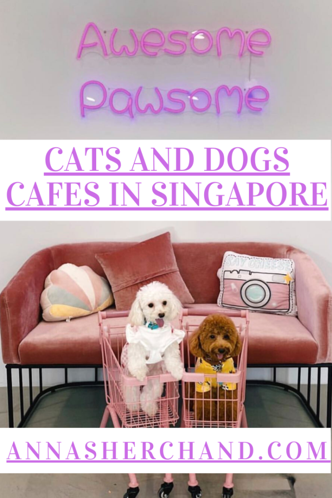Dogs cafe in singapore