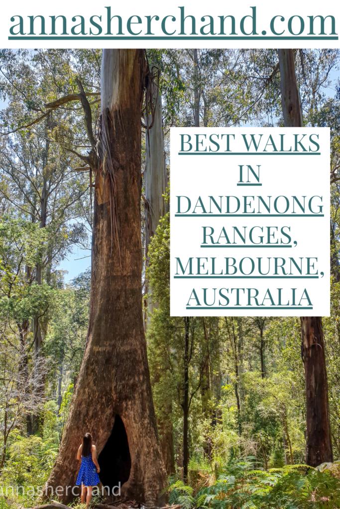 Best walks in Dandenong ranges